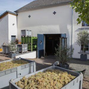 Weingut Peter Lauer im Weinanbaugebiet Mosel