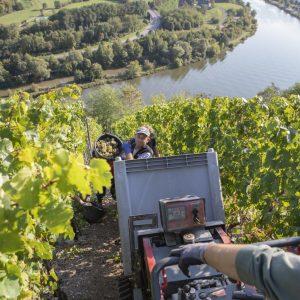 Handlese von Rieslingweinen an der Saar